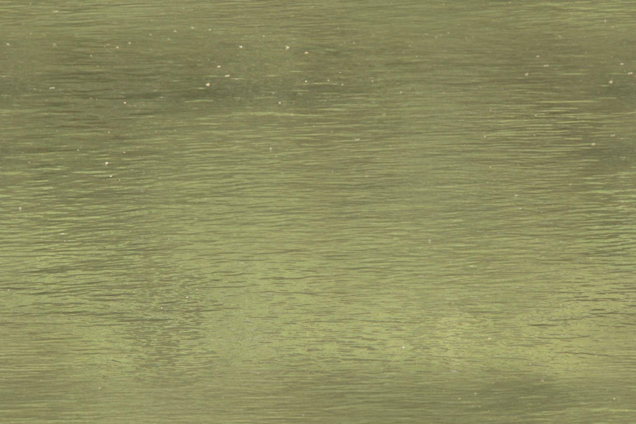 calm water texture. GreenCalm_S.jpg Calm Water Texture