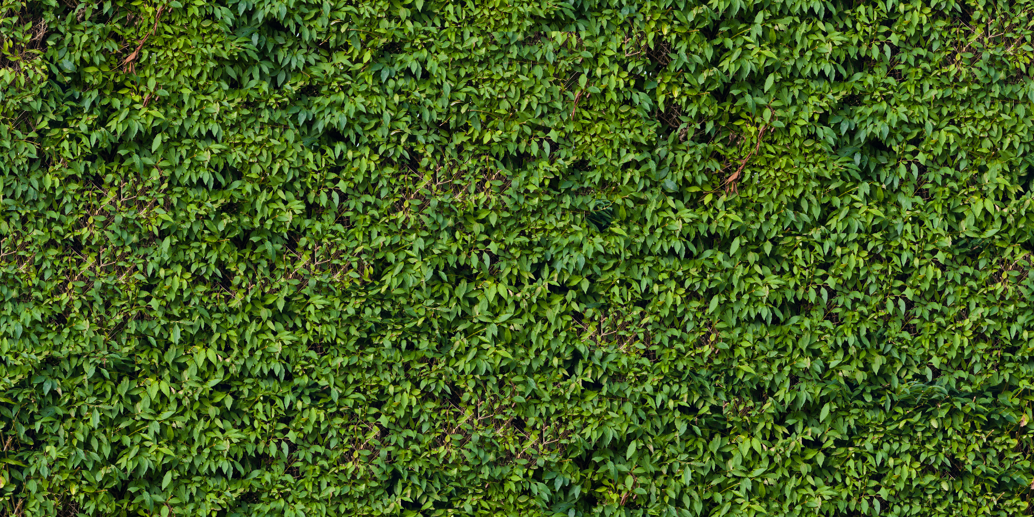 Hedge Seamless Texture Pack Vegetation Hedge 24 Png