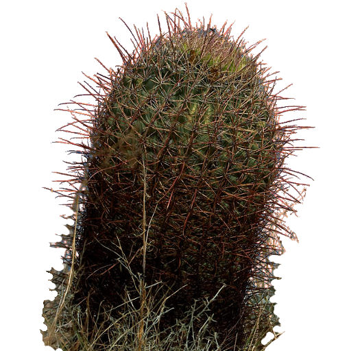 Cactus Sprite Texture Opengameart Org