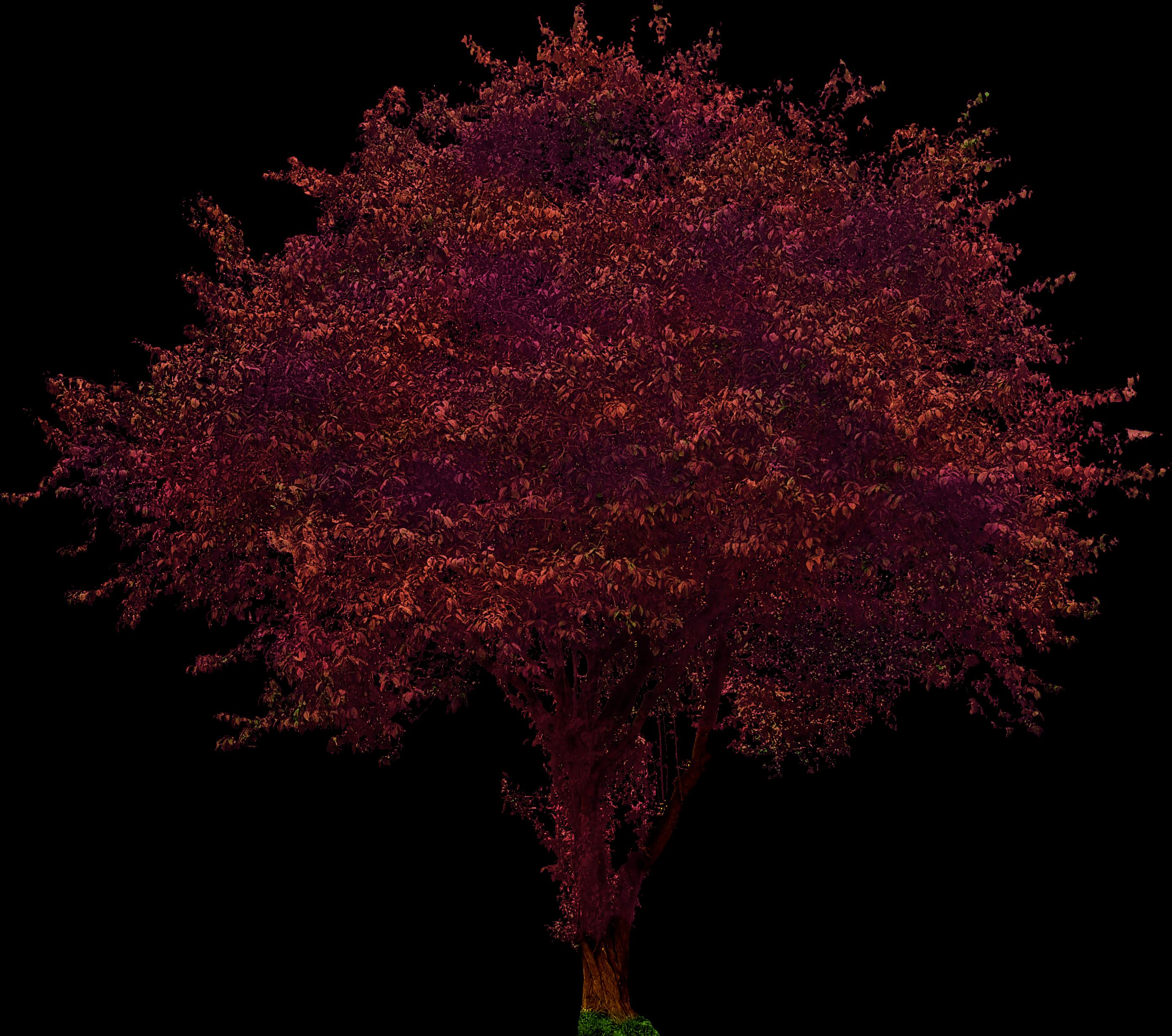 Purple Leaf Plum Tree Opengameart Org