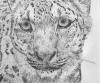 felinoid's picture